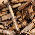 Energía Biomasa: ¿Qué es? ¿Cómo funciona? Tipos, Usos y Ejemplos🌴🍂
