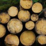 Energía de Biocarburantes: ¿Qué son y Cómo se utilizan? [Ejemplos]
