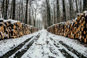 energía de biocombustibles tala de bosques