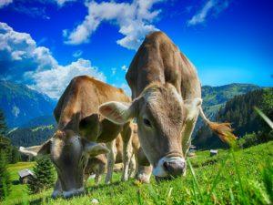 Agricultura biomasa