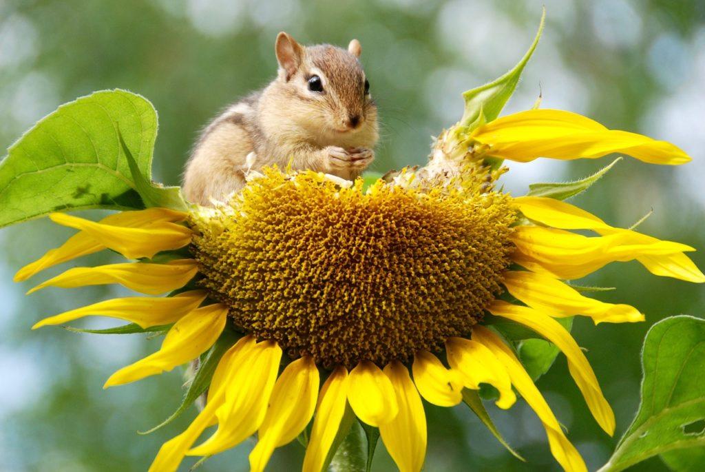 biodiversidad concepto