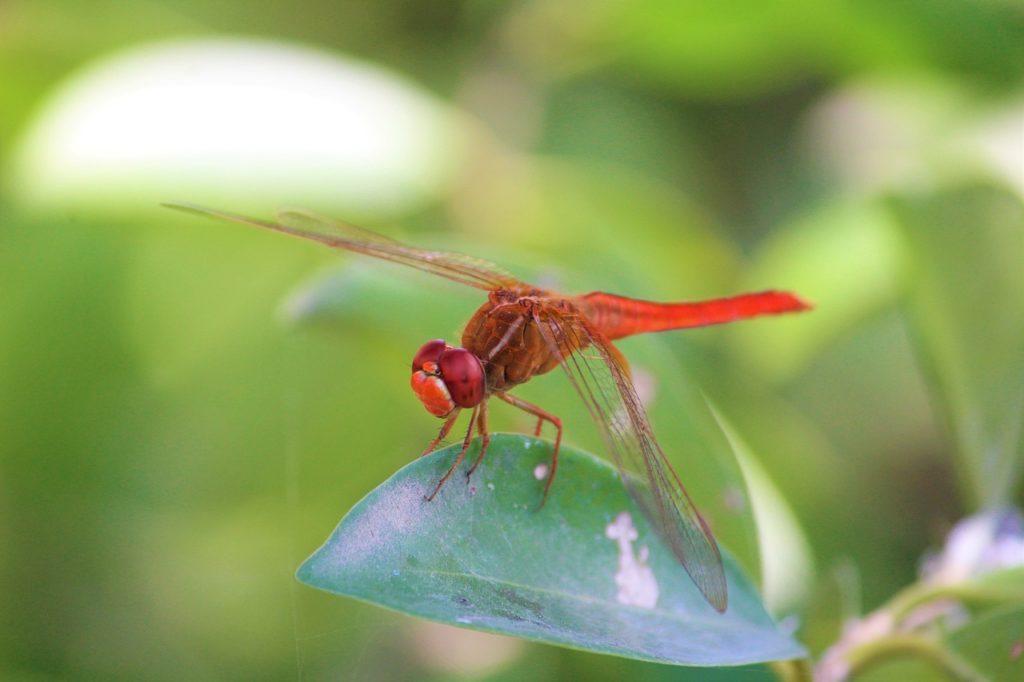 Biodiversidad tipos