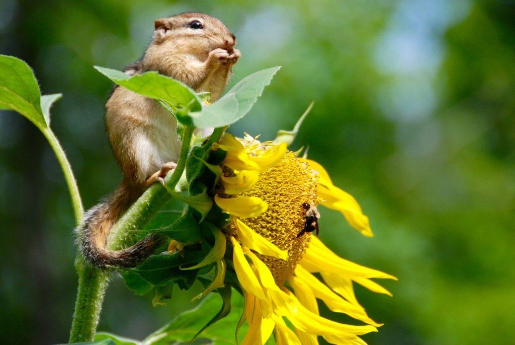 Biodiversidad y contaminación atmosférica