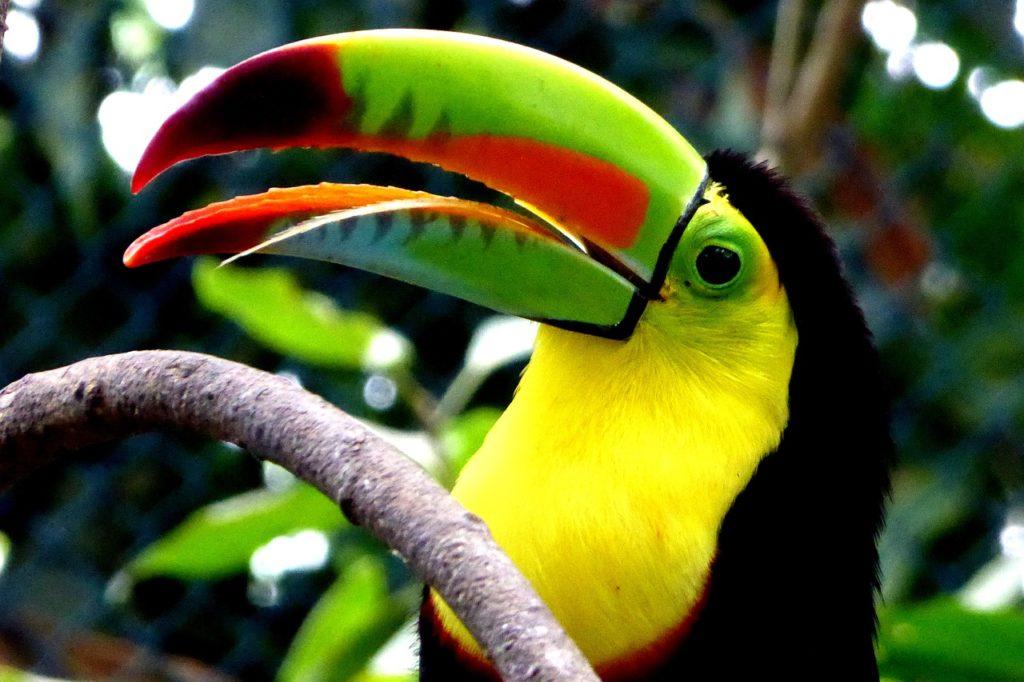 biodiversidad colombia