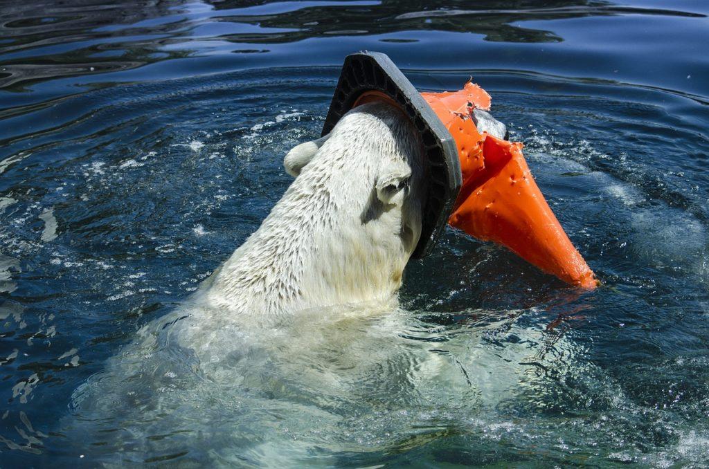 contaminación del mar flora y fauna
