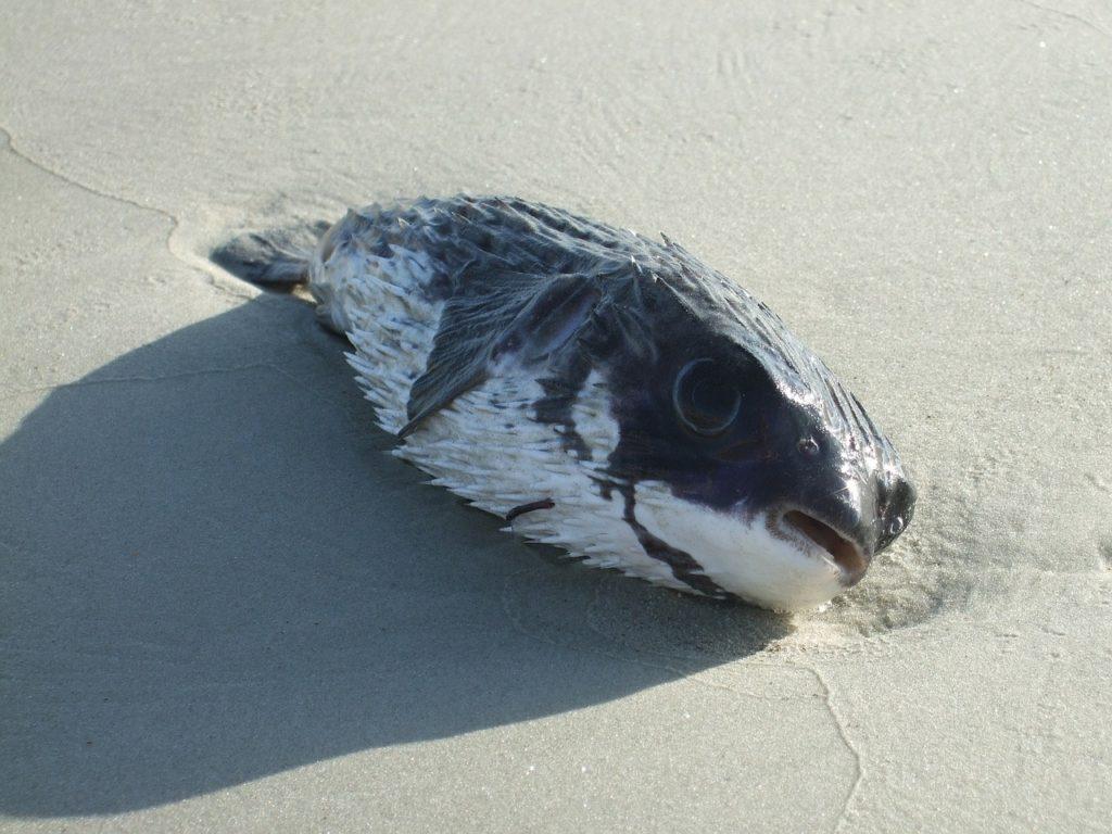 muerte peces por contaminación