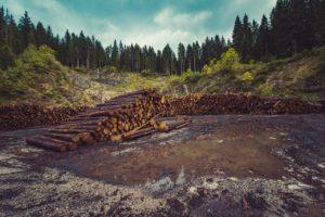 deforestación efecto invernadero