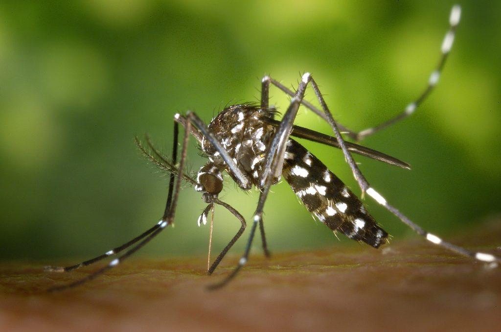 enfermedades letales contaminación