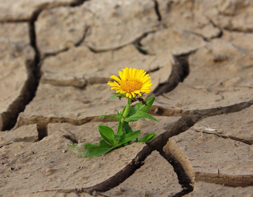 Sequía contaminación