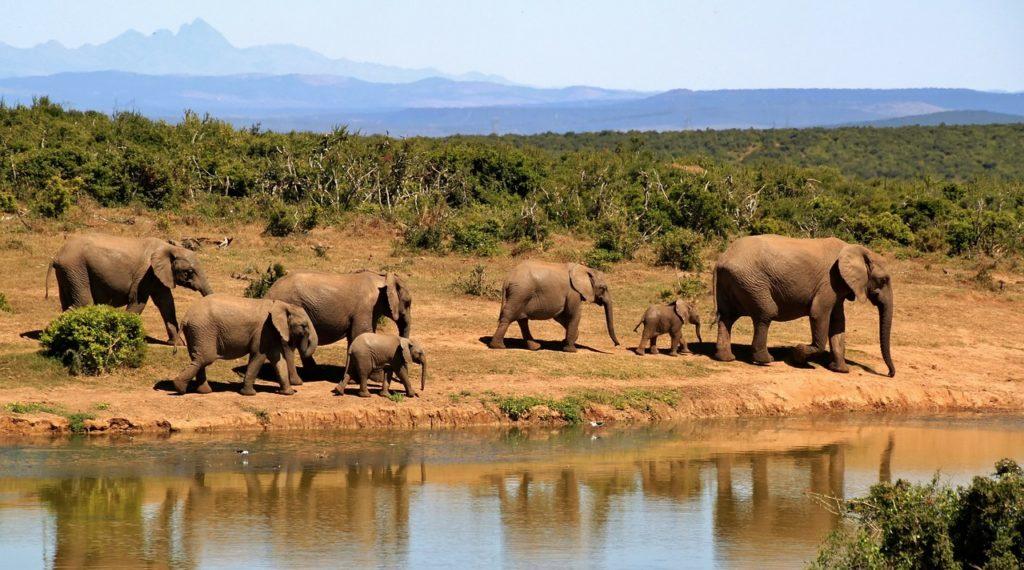 sudáfrica biodiversidad