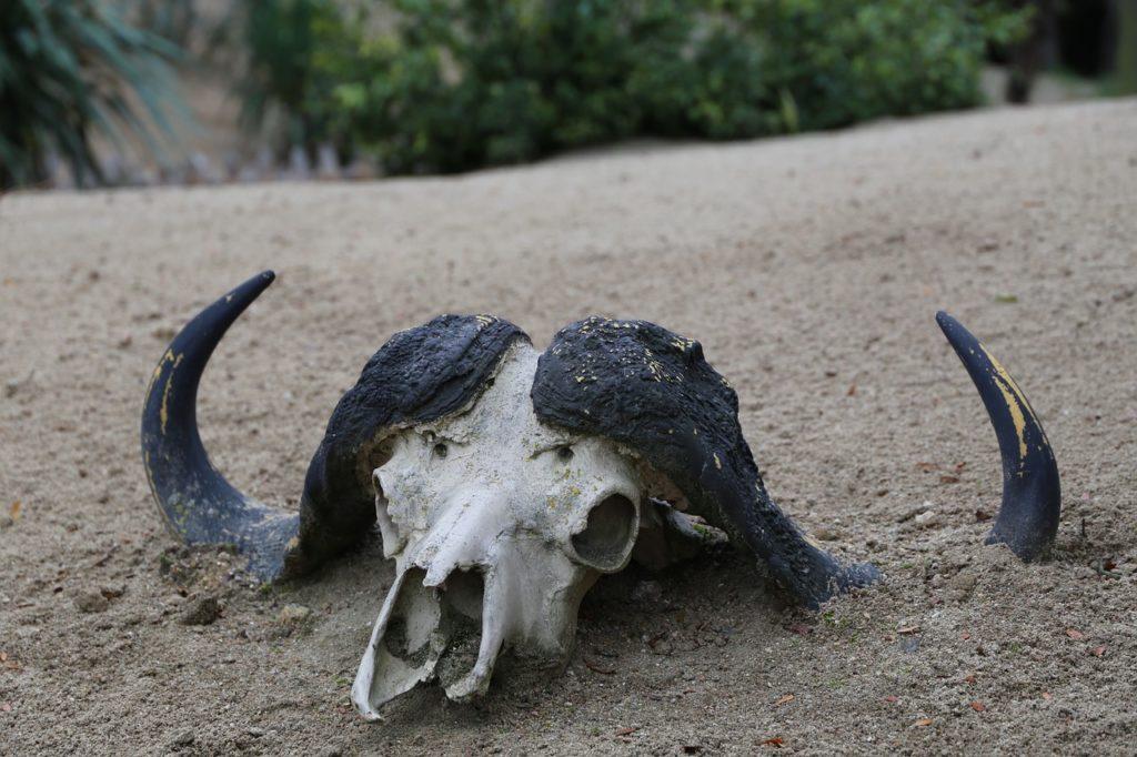 Animal, Muerto ciclo del fósforo
