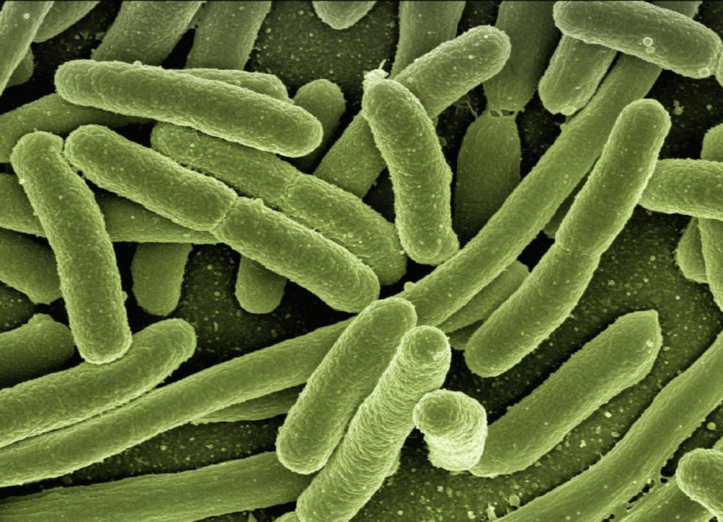 Bacterias fijadoras N2 ciclo del nitrógeno
