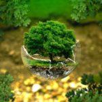 Ciclos Biogeoquímicos: ¿Qué son y Cómo funcionan? [Tipos y Ejemplos]