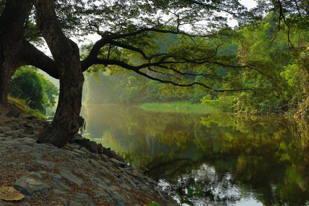 vegetación ríos contaminación