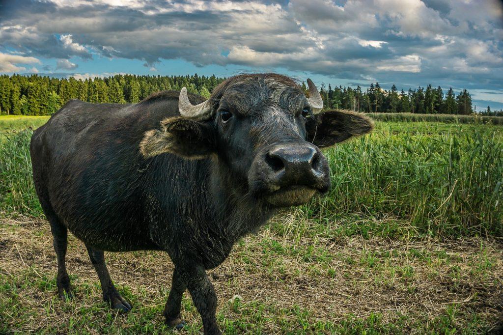 parque nacional búfalo de los bosques