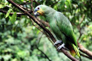 Amazonas ecosistema selvático