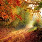 Ecosistemas Forestales: [Concepto, Tipos y Ejemplos] 🏕🛤