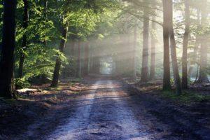 ecosistemas forestales qué son
