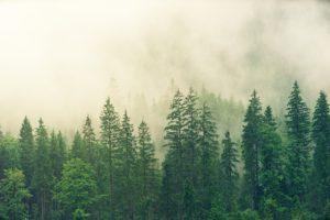 ecosistemas forestales o de bosque