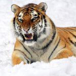 La Extinción: ¿Qué es? ¿Qué animales están en peligro? [Tipos]🐼🐨