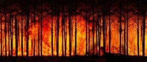 quema de bosques en el cuidado del medioambiente