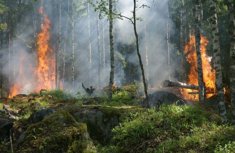 Incendios y consecuencias del cambio climáticos