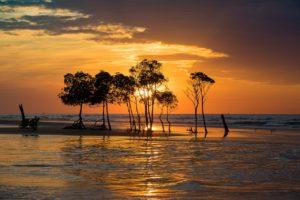 Manglar ecosistemas acuáticos