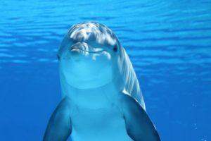 qué es un ecosistema marino o acuático