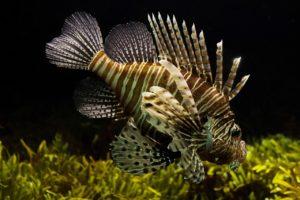 ecosistemas marinos y acuáticos concepto
