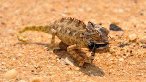 reptil en ecosistemas desérticos