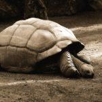 Especies Endémicas: ¿Qué son? ¿Por qué son Importantes? [Ejemplos]