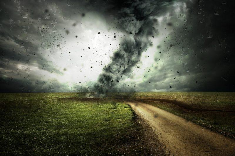 ecosistemas terrestres y viento