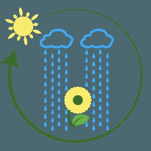 ETALFA_ciclos biogeoquimicos