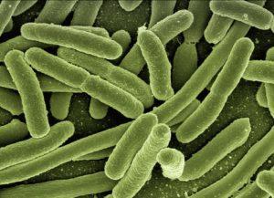 Bacterias reinos de la naturaleza