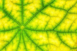 Fotosintesis reino plantae