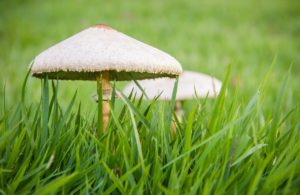 importancia del reino fungi