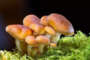 qué es el reino fungi