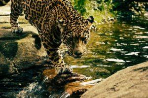 reino animalia movimiento