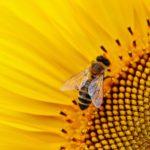 Polinización: ¿Qué es? ¿Por qué es Sumamente Importante? 🐝 🌼