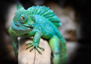 reino animalia reptiles