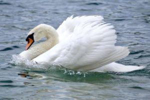 fauna de los ecosistemas de agua dulce