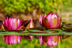 la flora en los ecosistemas de agua dulce