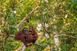 causas de la deforestación aceite de palma