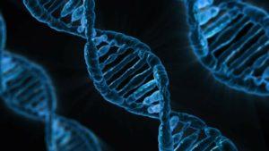 ramas de la biología el ADN