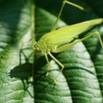 ¿Cuáles son las Principales Características de la Biodiversidad?