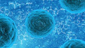 ramas de la biología la biología celular