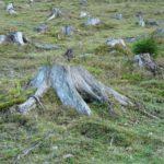 Lista de [10] Catastróficas Consecuencias de la Deforestación
