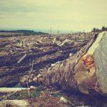 ¿Qué Relación hay Entre la Deforestación y Cambio Climático?