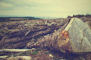 deforestación y cambio climático qué relación tienen