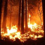 Deforestación: [Causas, Consecuencias y Posibles Soluciones]